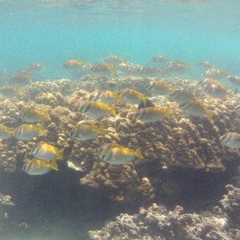 魚の楽園 タオ島