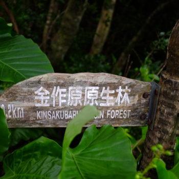 奄美 金作原原生林への冒険